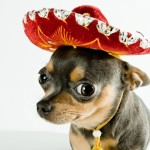 Canine Breeds with a Latino Passport!